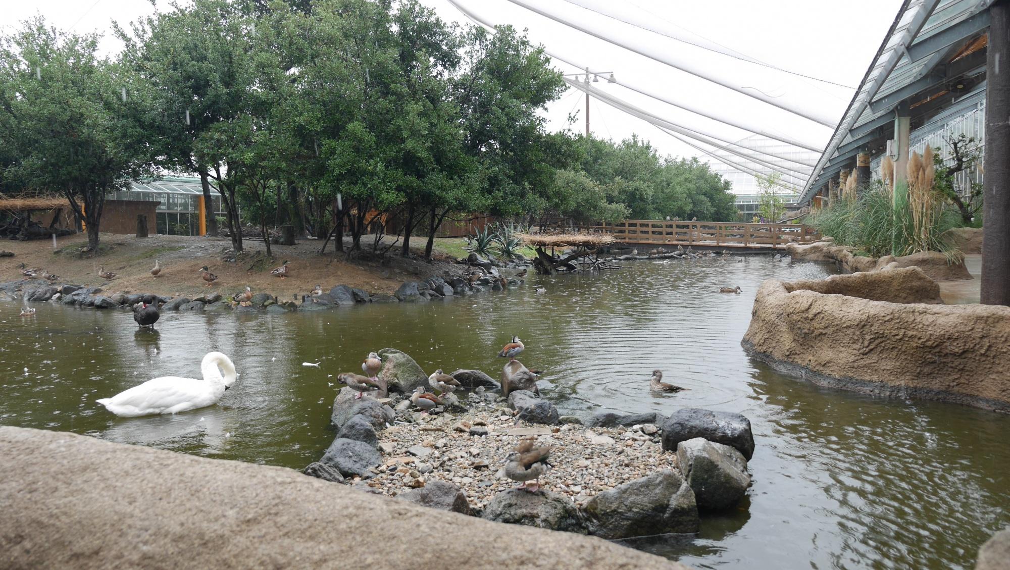 ペリカンラグーン(Pelican Lagoon)エリア