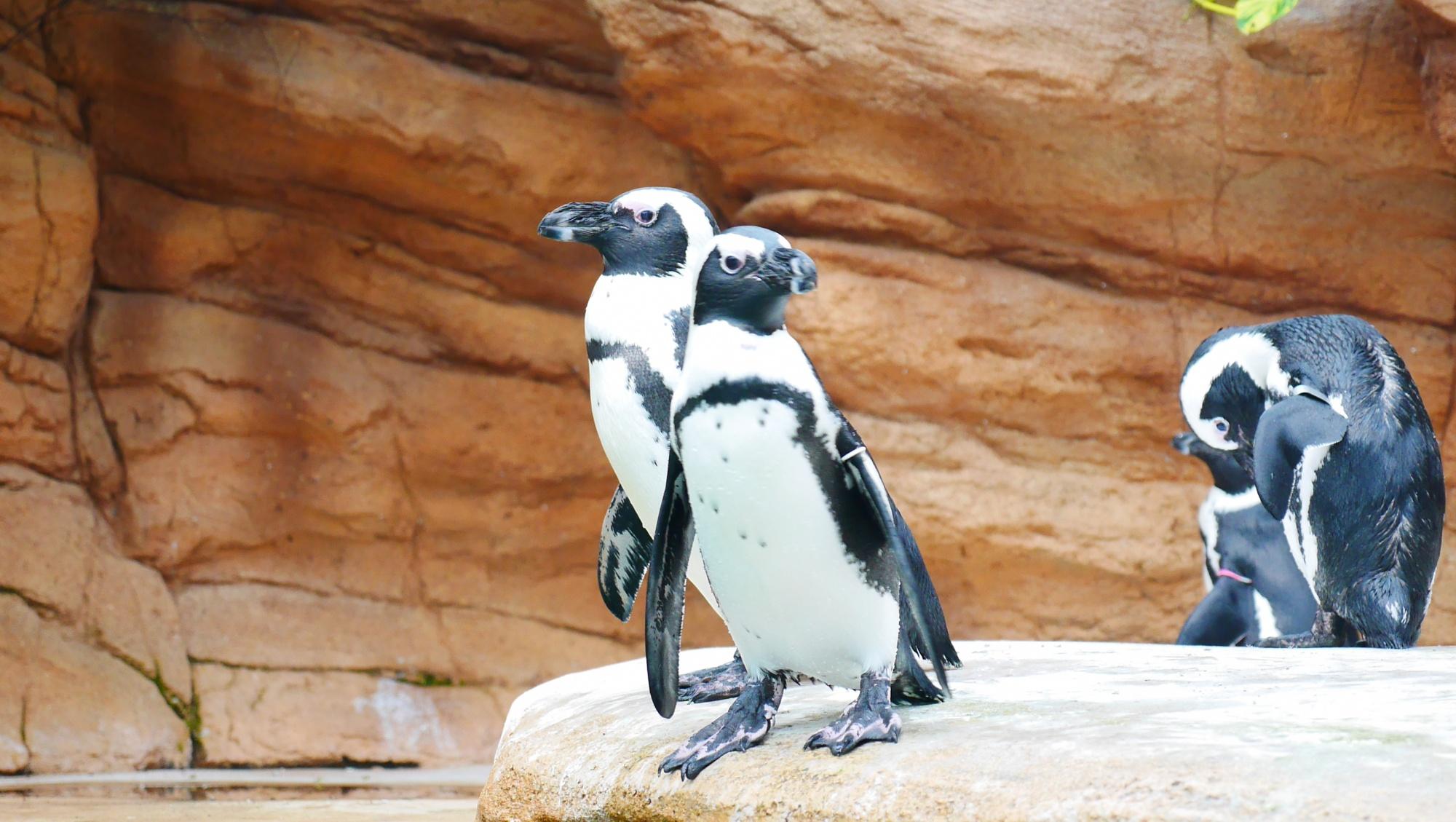 ペンギン(Penguin)