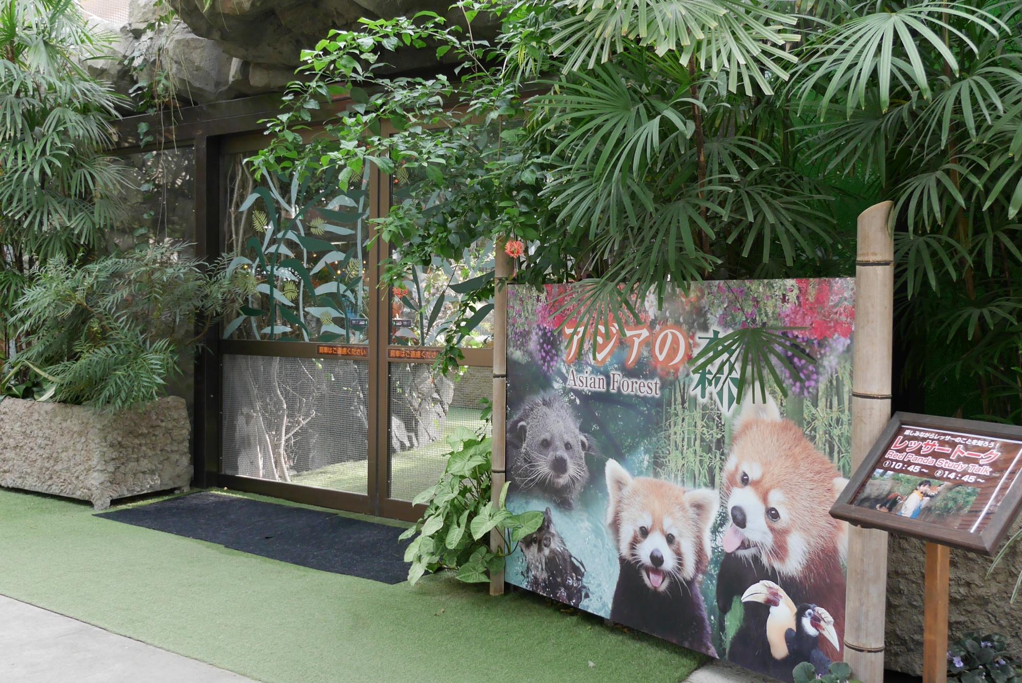 アジアの森(Asian Forest)