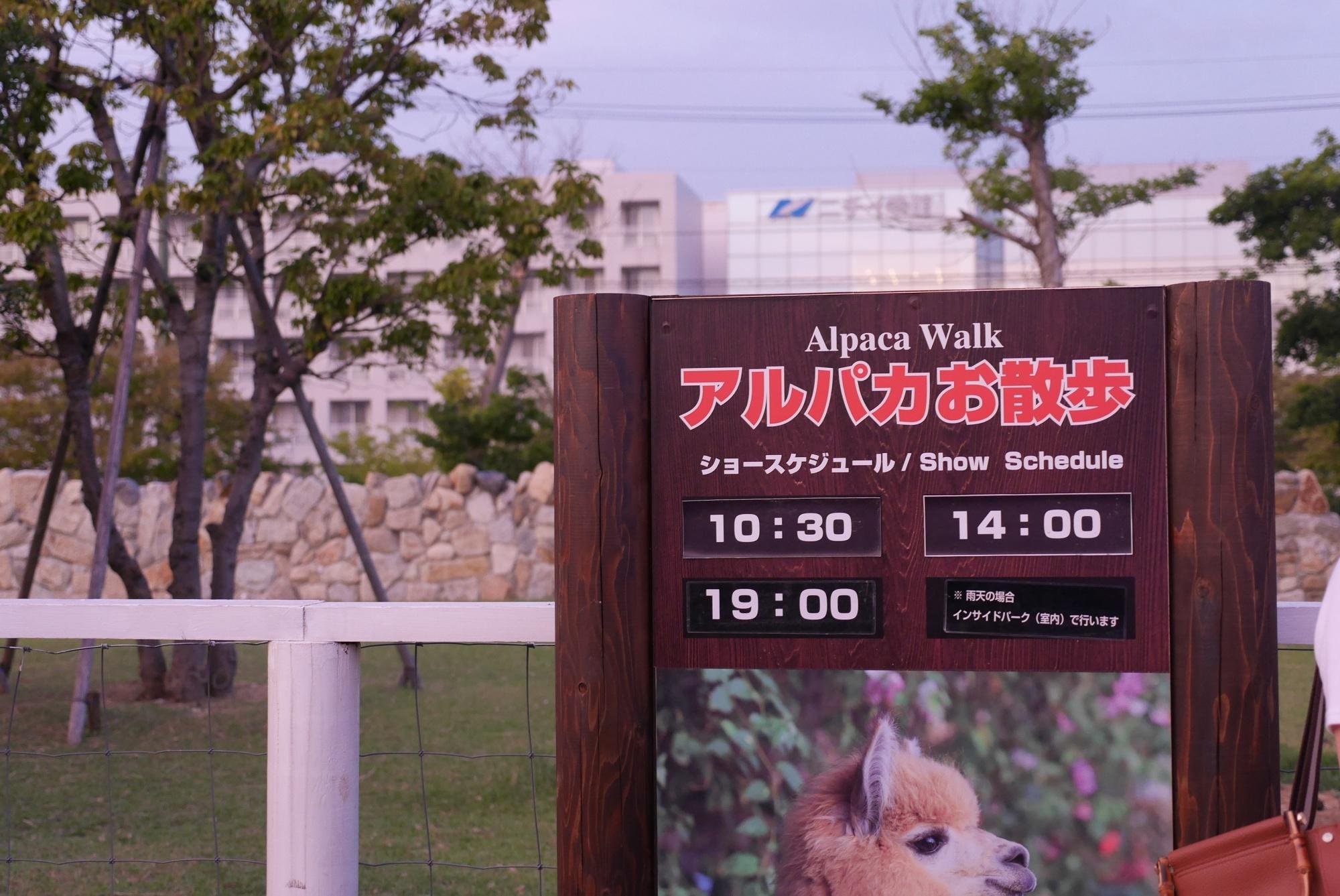 アルパカお散歩の時間