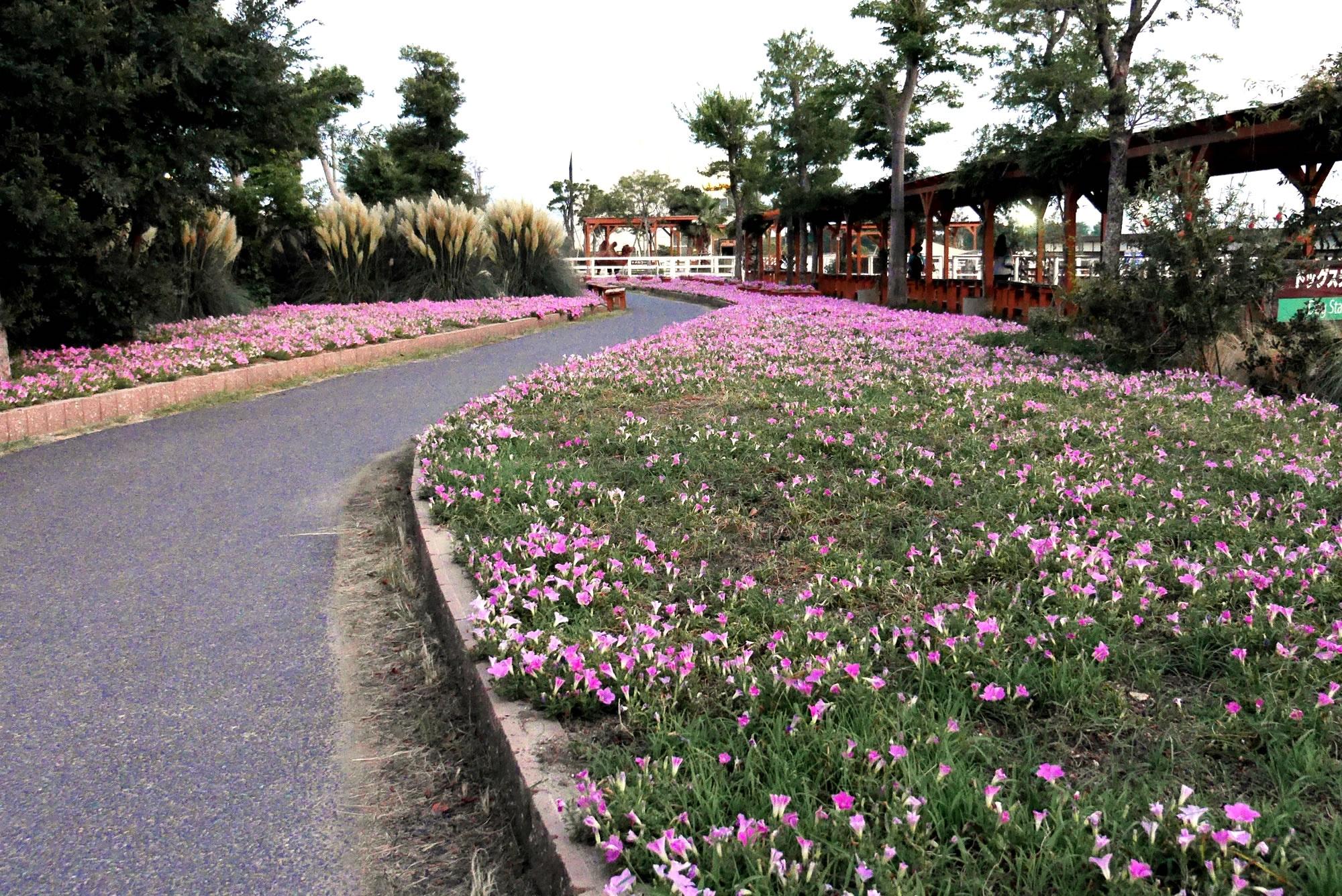 お花畑(Flower Beds)