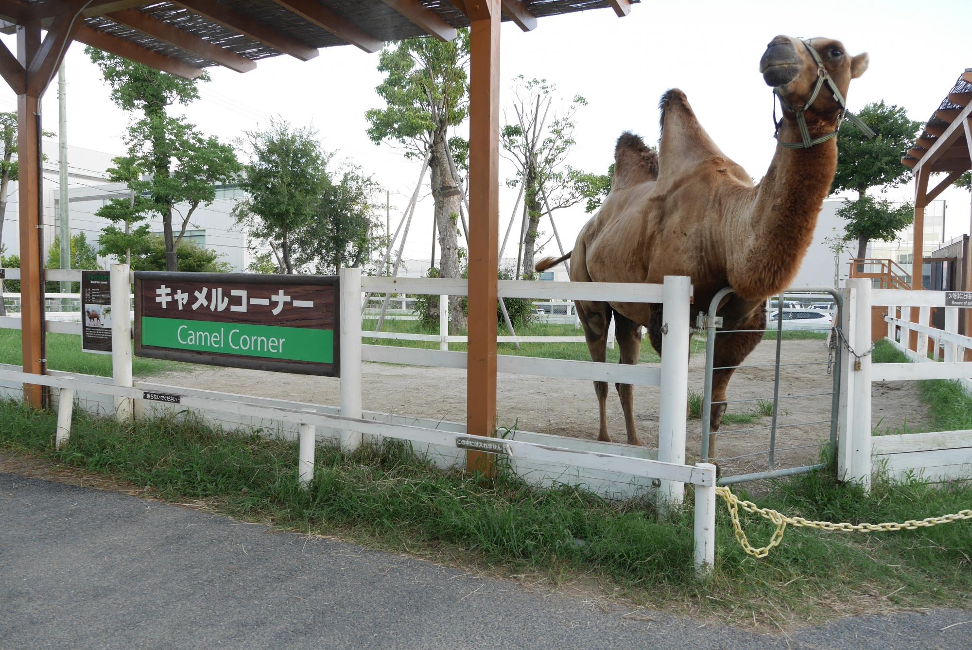 キャメルコーナー(Camel Corner)