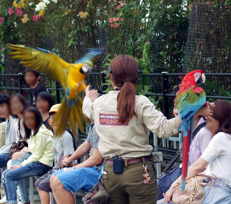 バードパフォーマンスショー(Bird Performance Show Stage)