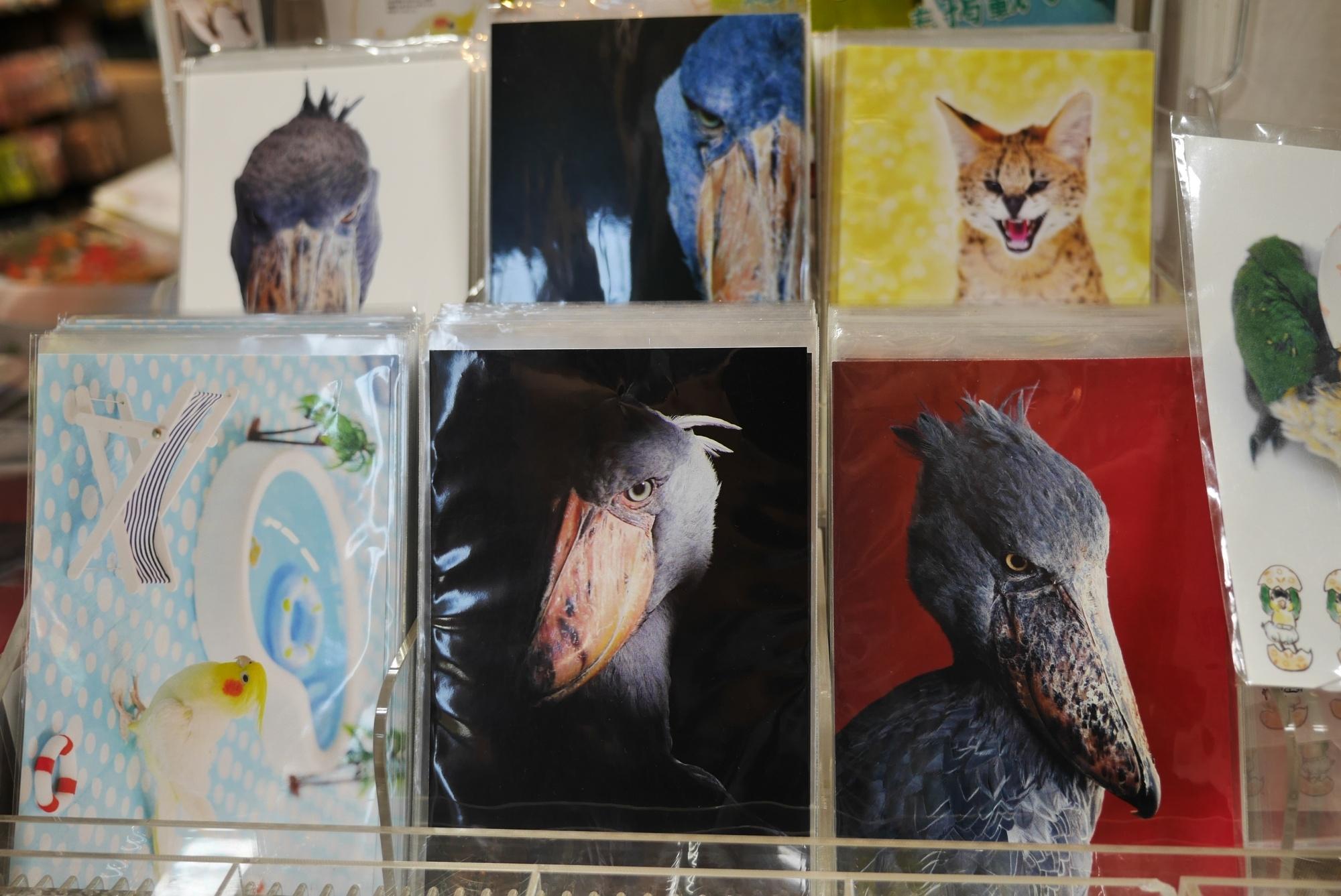 ハシビロコウのポストカード