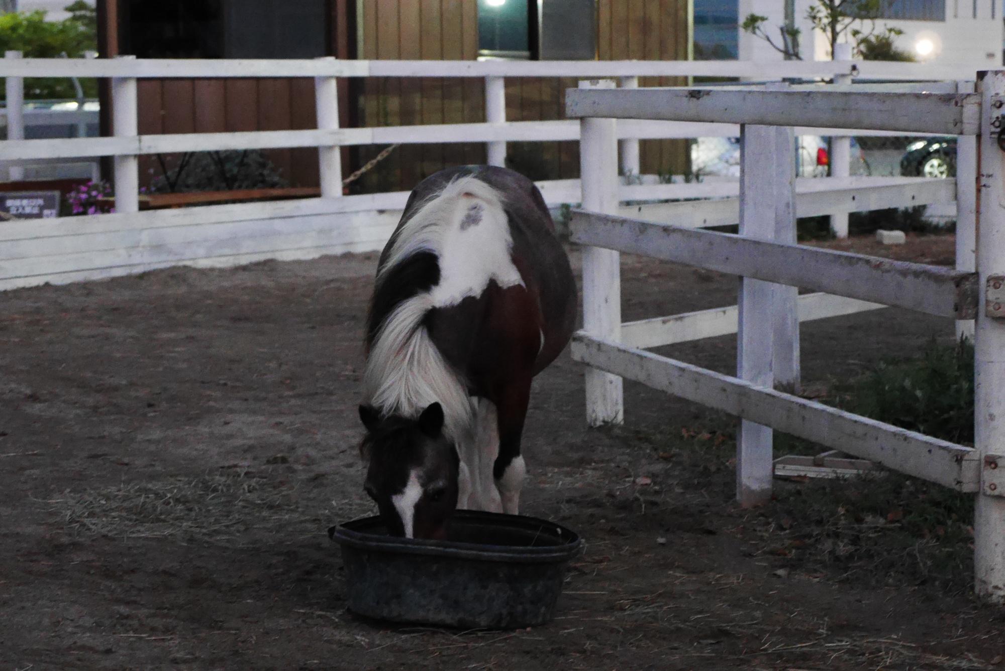 ポニー(Pony)